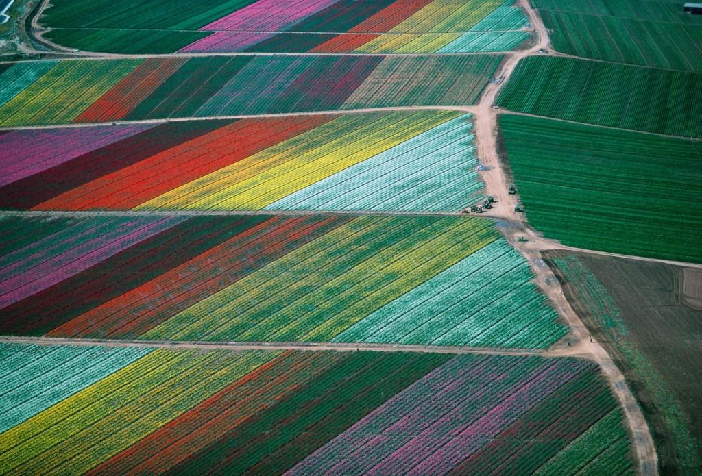 Un champ de fleurs multicolore à Carlsbad en Californie. (1989)